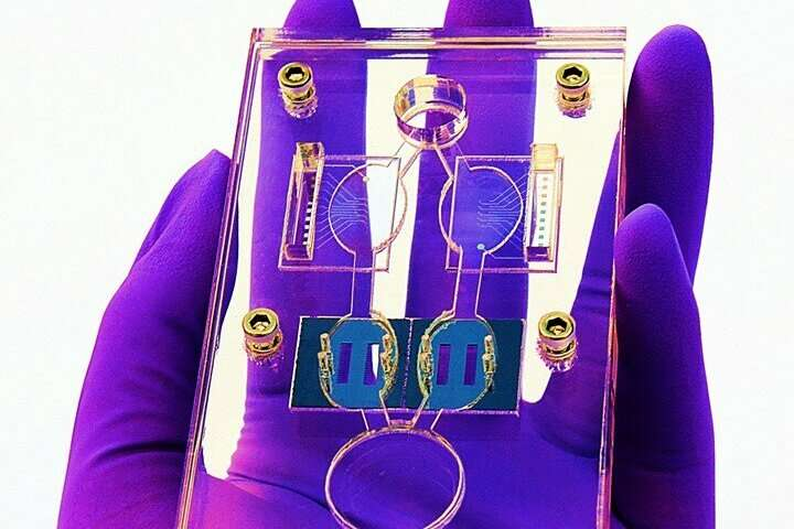 Hesperos' multi-organ 'human-on-a-chip' found effective for long-term toxicology testing