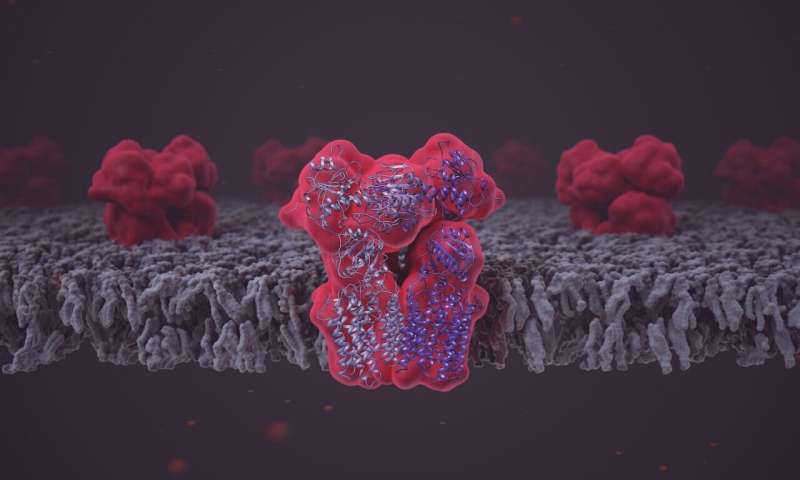 High-end microscopy reveals structure and function of crucial metabolic enzyme