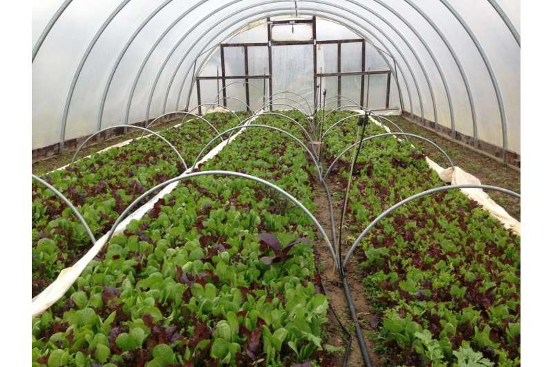 High tunnels for specialty crops: The hope and the hinderance