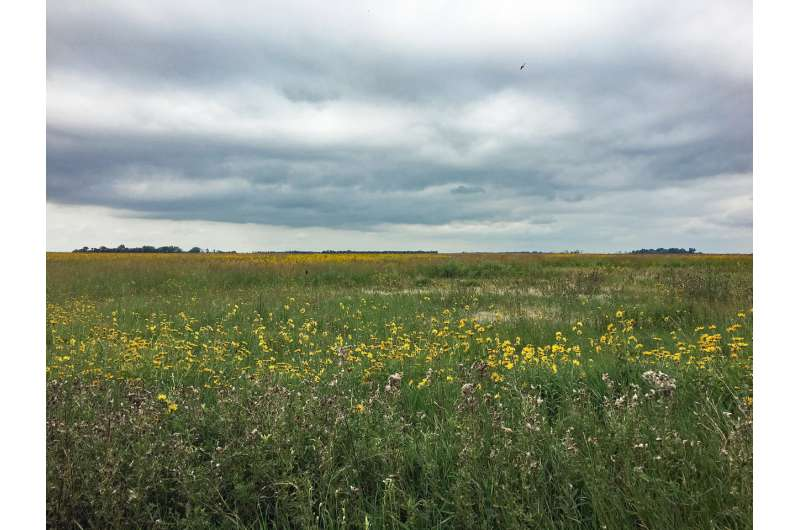 Honey bee colonies more successful by foraging on non-crop fields