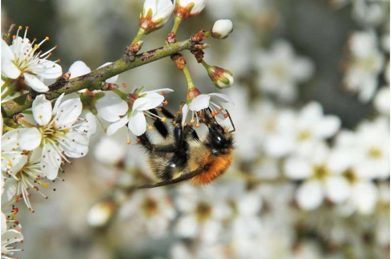 Honeybee mite raises bumblebee virus risk