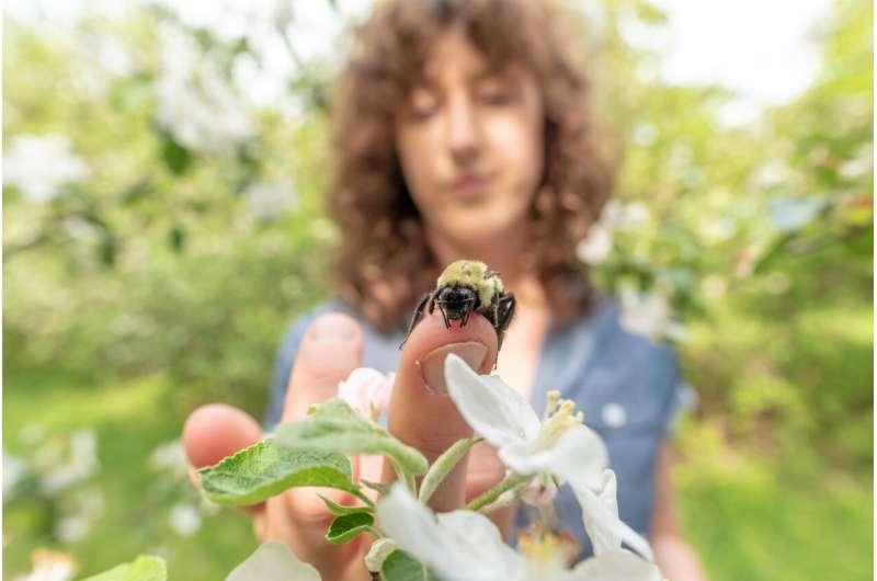 Honeybees infect wild bumblebees -- through shared flowers
