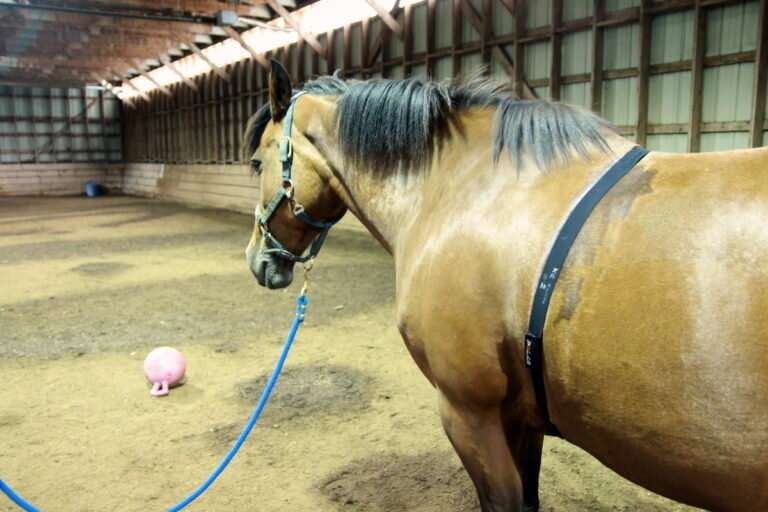 Horses blink less, twitch eyelids more when stressed
