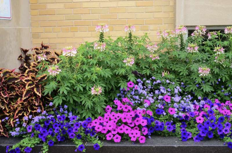 Hot town, springtime in the city: Urbanization delays spring plant growth in warm regions