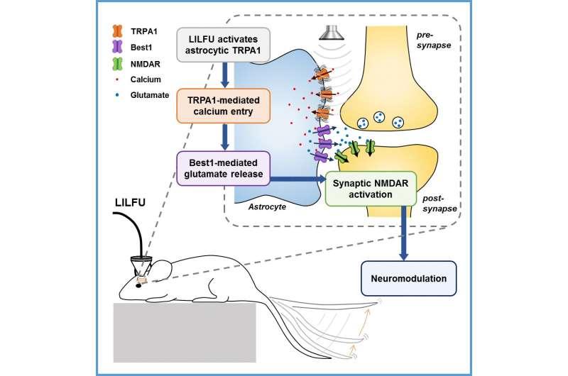 How can ultrasonic brain stimulation cure brain diseases?