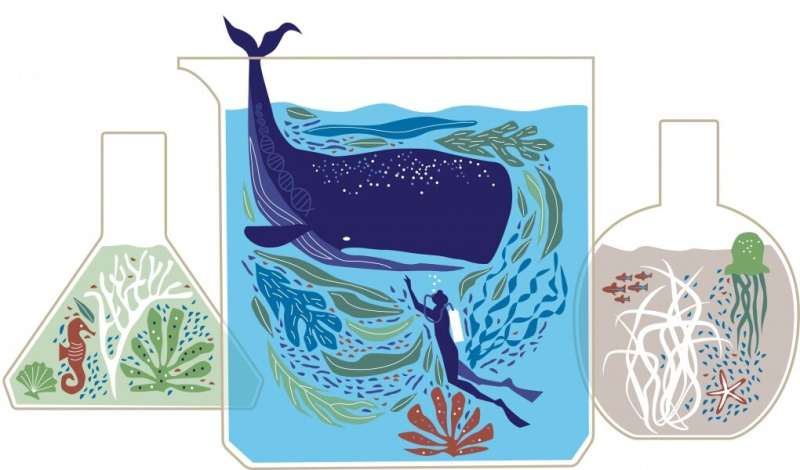 How do whales fight off cancer?