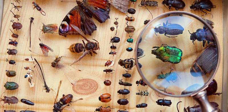 How many species on Earth? A simple question that's hard to answer