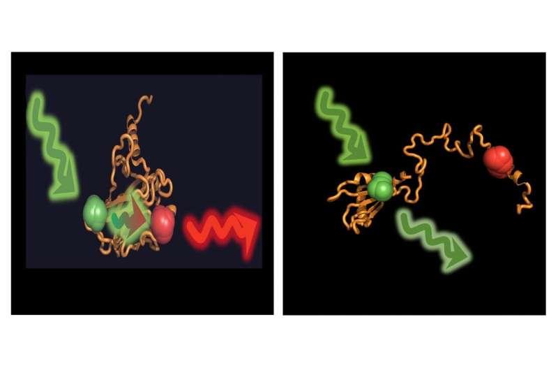 How molecular escorts help prevent cancer