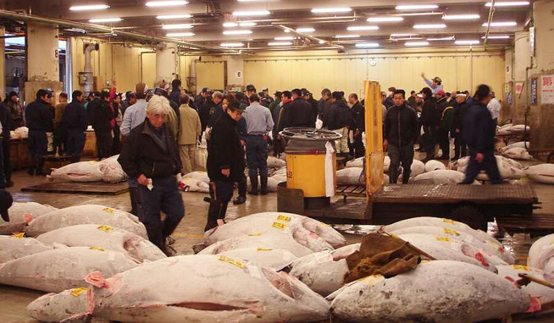 How sustainable is tuna? New global catch database exposes dangerous fishing trends