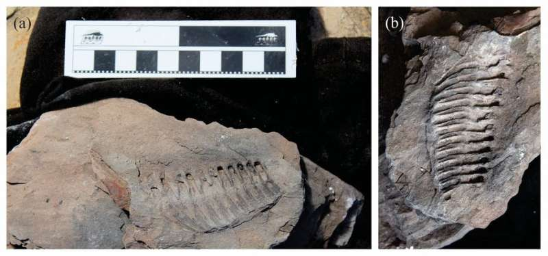 How we know that ancient African people valued fossils and rocks