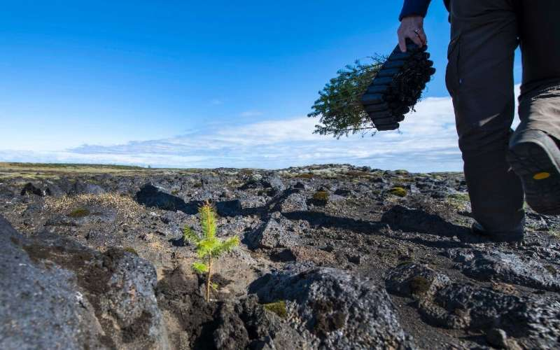 Iceland's lack of trees means there isn't any vegetation to protect the soil from eroding and to store water, leading to extensi