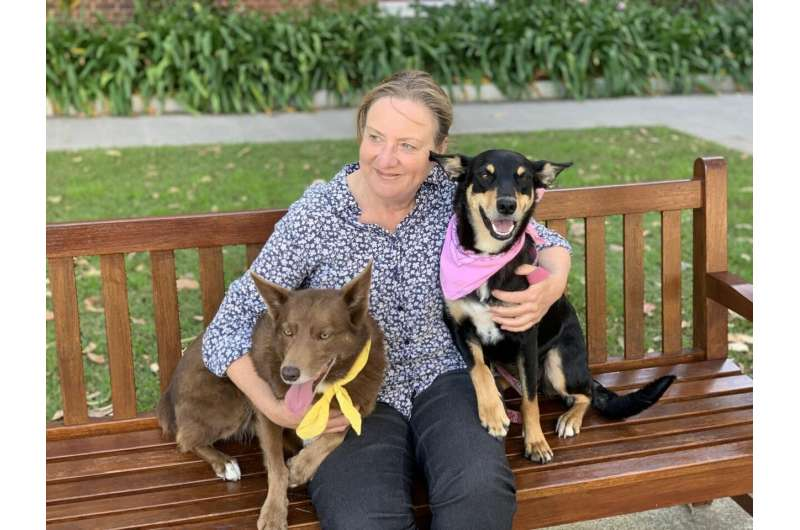 Iconic Australian working dog may not be part dingo after all