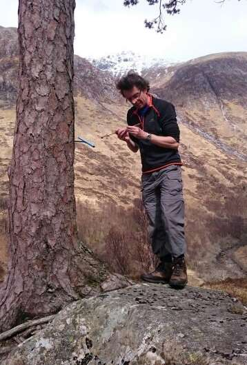 In ancient Scottish tree rings, a cautionary tale on climate, politics and survival