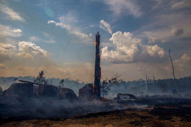 In Brazil 88,816 fires were recorded from January to the end of August