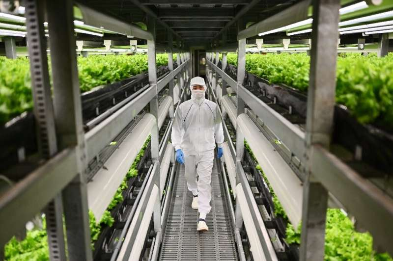 In Japan, vertical farming is taking offing as traditional methods face a double threat from the ageing population and migration