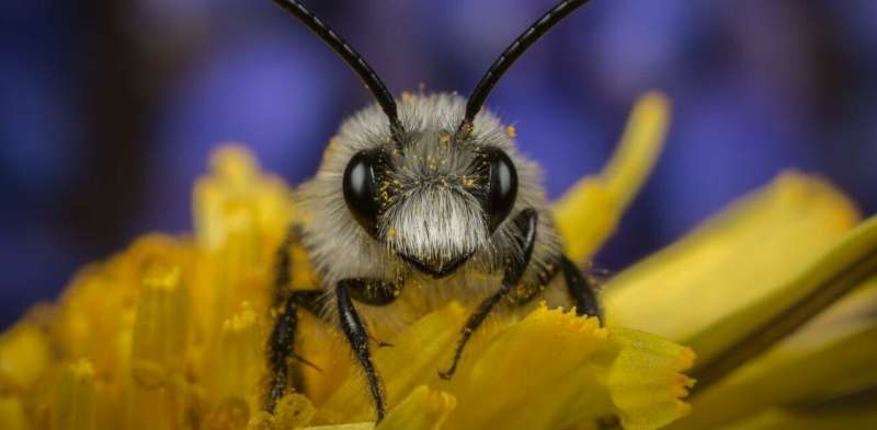Insect species that prefer crops prosper while majority decline
