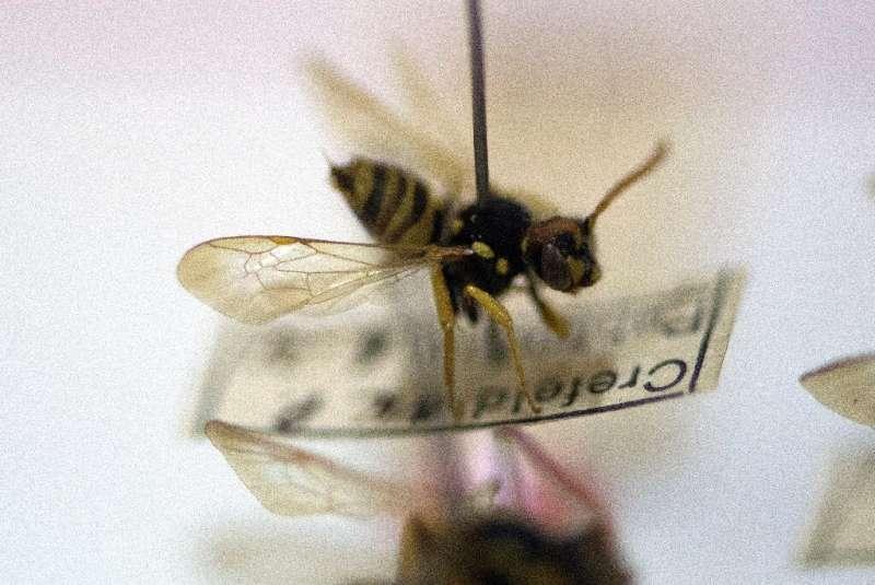 Los insectos, que comprenden dos tercios de todas las especies terrestres, han estado muriendo a un ritmo alarmante, con impactos desastrosos en