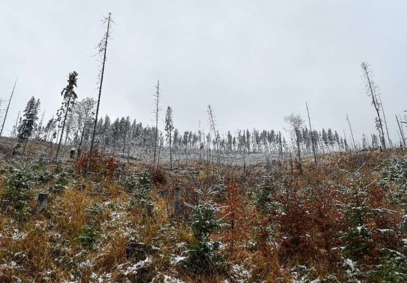 In the Fagaras mountains, hundreds of hectares of forests were cut between 2008 and 2012