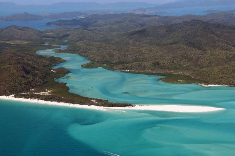In the past year there have been several shark attacks in waters around Australia's Whitsunday Islands