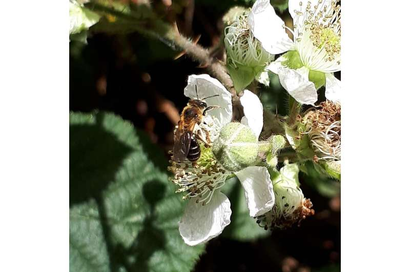 Invest in pollinator monitoring for long-term gain