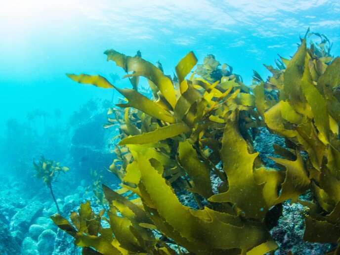 Is seaweed the solution to sustainable biofuel?