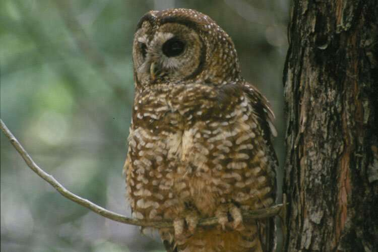 Is wildfire management 'for the birds?'
