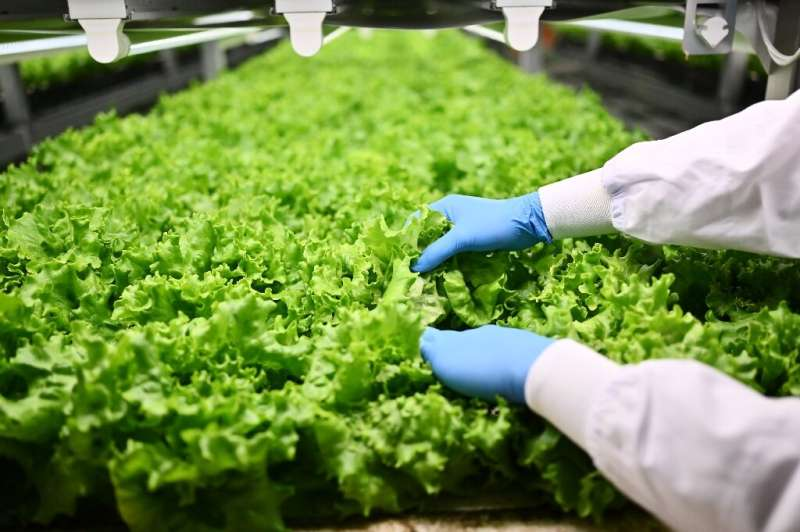 Japan already has around 200 lettuce factories using artificial light but the majority of these are small-scale but according to