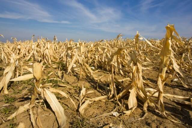 J-WAFS zeroes in on food security as agricultural impacts of the climate crisis become more apparent