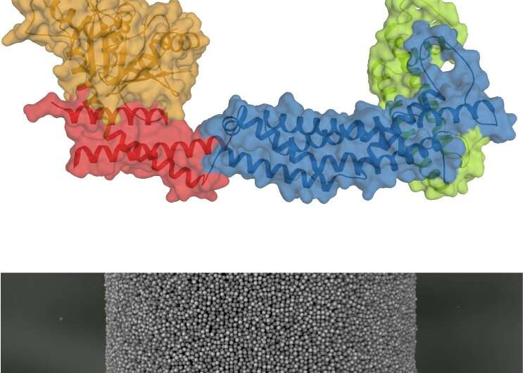 Keeping a cell's powerhouse in shape