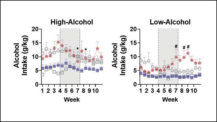 Ketamine reduces drinking in male, but not female, rats