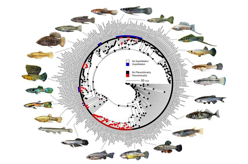 Ladies' choice: What drives faster, flashier formation of new animal species