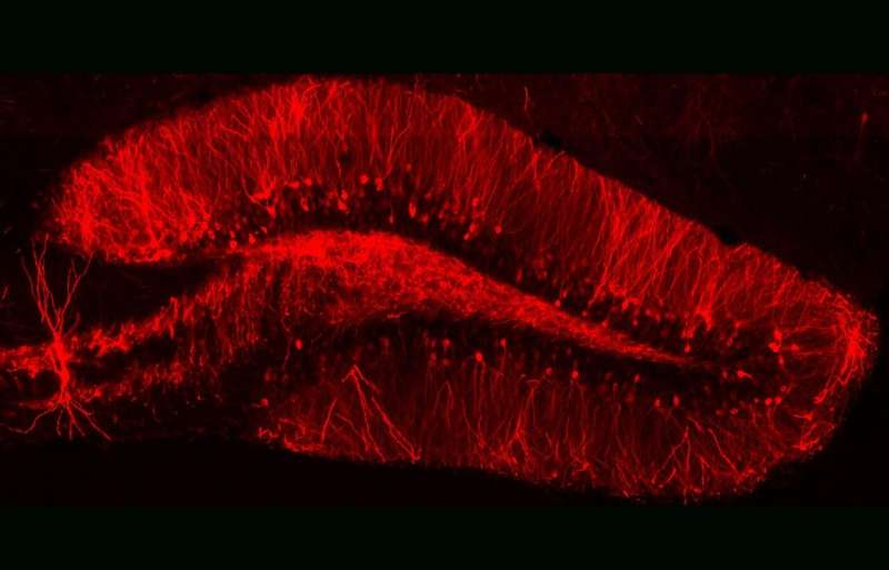 Learning how memory works could be key to treating PTSD