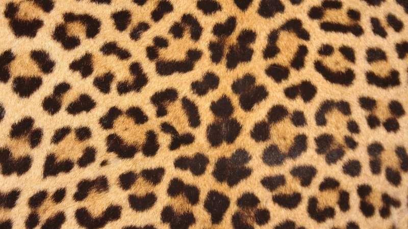 leopards' spots