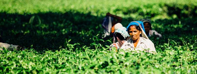 Less rice, more nutritious crops will enhance India's food supply