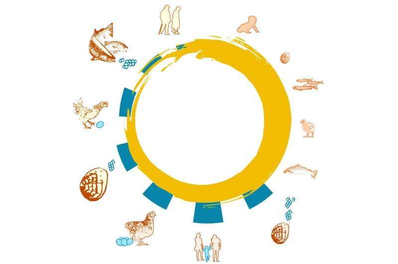 Live fast and die young, or play the long game? Scientists map 121 animal life cycles