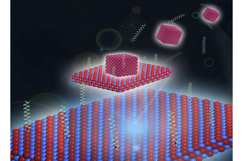 Living on the edge: How a 2-D material got its shape