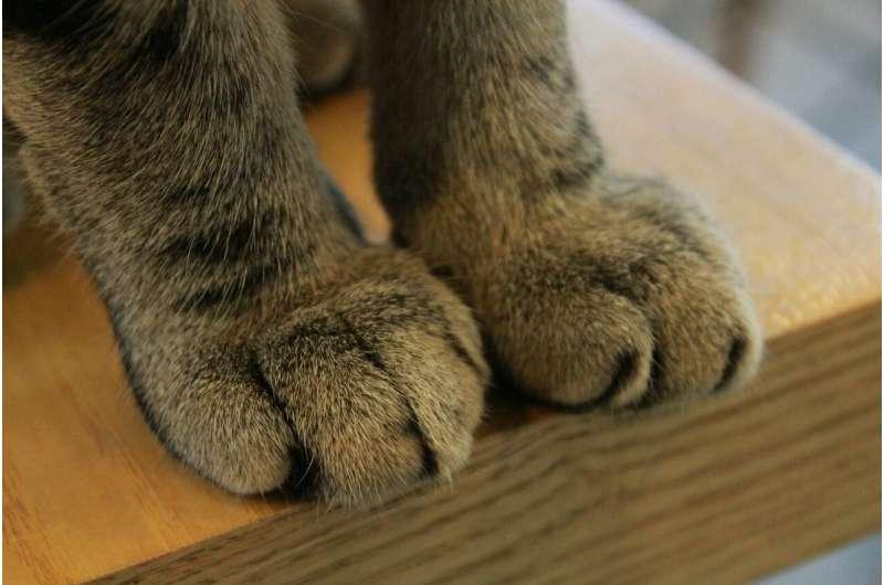 mammal foot