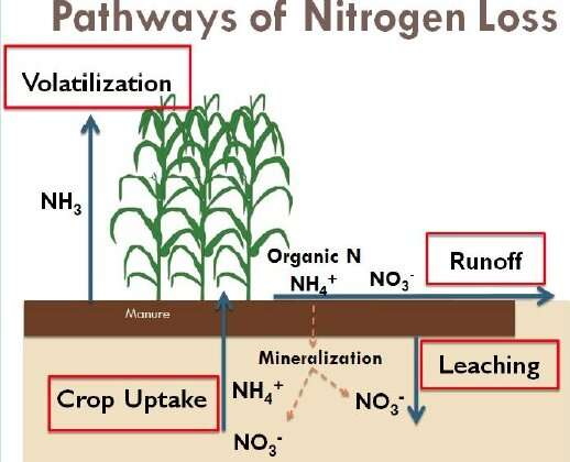 Los cambios en la aplicación de estiércol con los cultivos de invierno pueden reducir la pérdida de nitrógeno y aumentar las ganancias