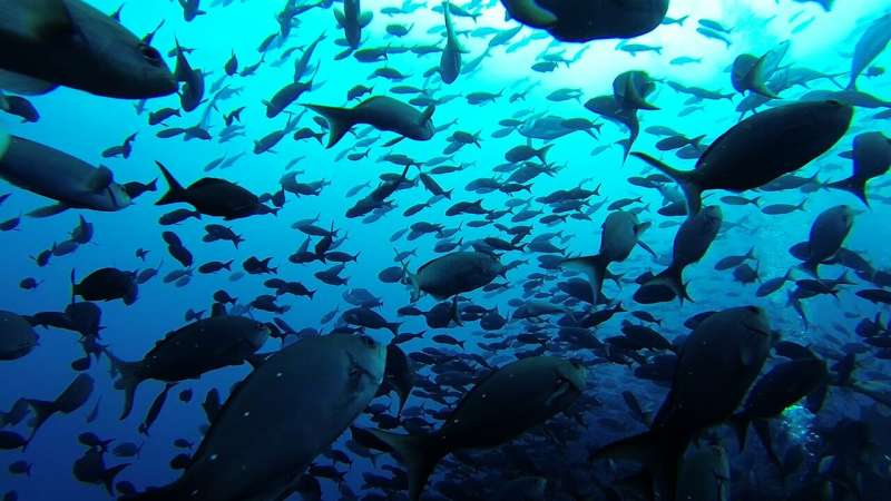 Marine protected reserves do more than restore fish