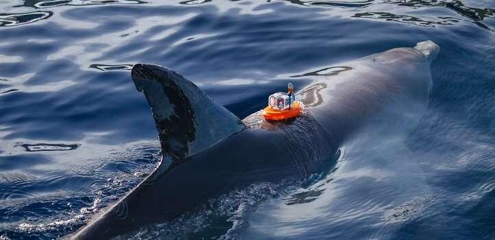 Marine sensor gets to grips with salt