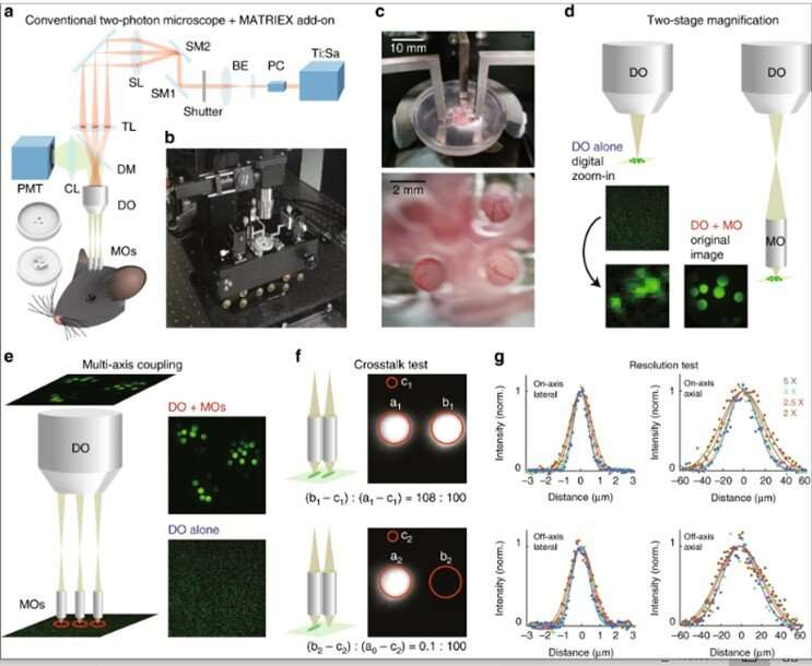 MATRIEX imaging: Simultaneously seeing neurons in action in multiple regions of the brain