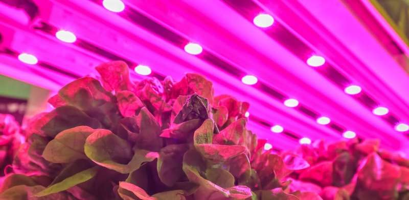 Micro-naps for plants: Flicking the lights on and off can save energy without hurting indoor agriculture harvests