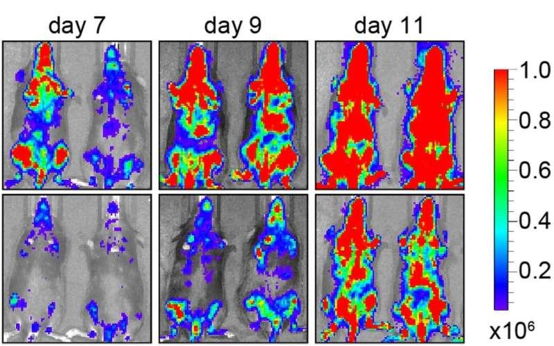 Milestone reached in new leukemia drug
