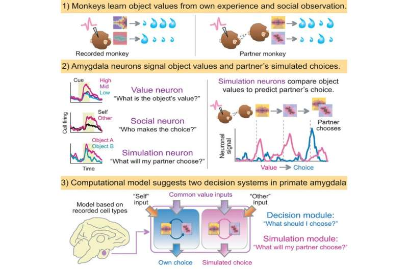 'Mindreading' neurons capable of having expectations about the behavior of the others