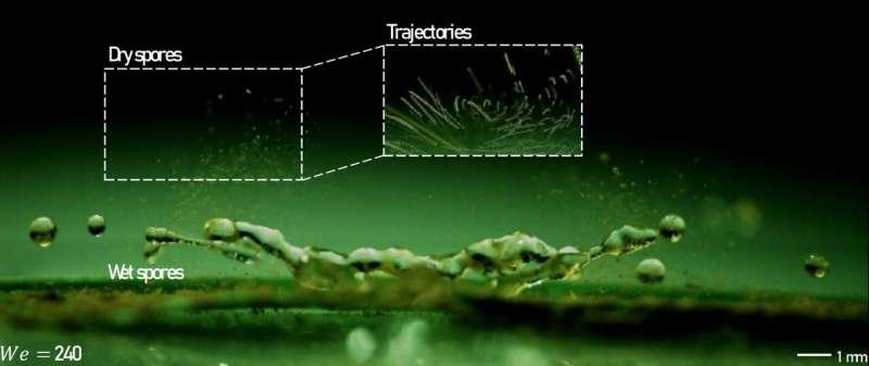 Mini-tornadoes of spores illuminated during raindrop impact