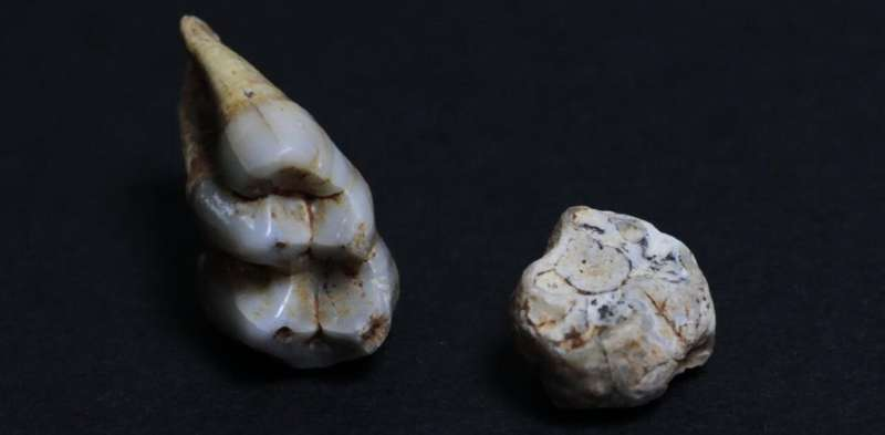 Monkey fossils found in Serbia offer clues about life in a warmer world millions of years ago