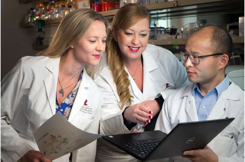 More accurate leukemia diagnosis expected as researchers refine leukemia classification