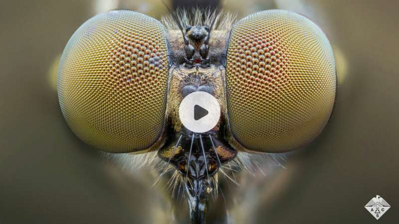 Mosquito eye inspires artificial compound lens (video)
