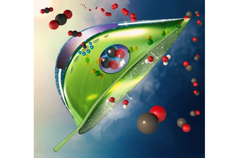 Moving artificial leaves out of the lab and into the air