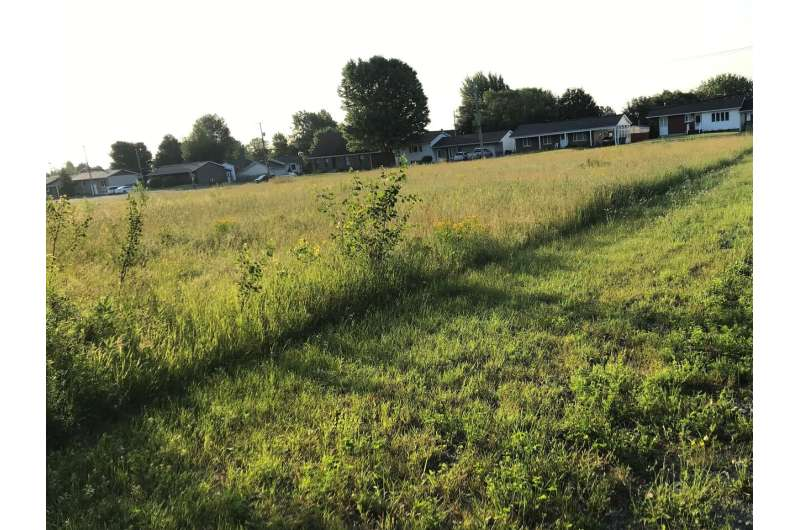 Mowing urban lawns less intensely increases biodiversity, saves money and reduces pests